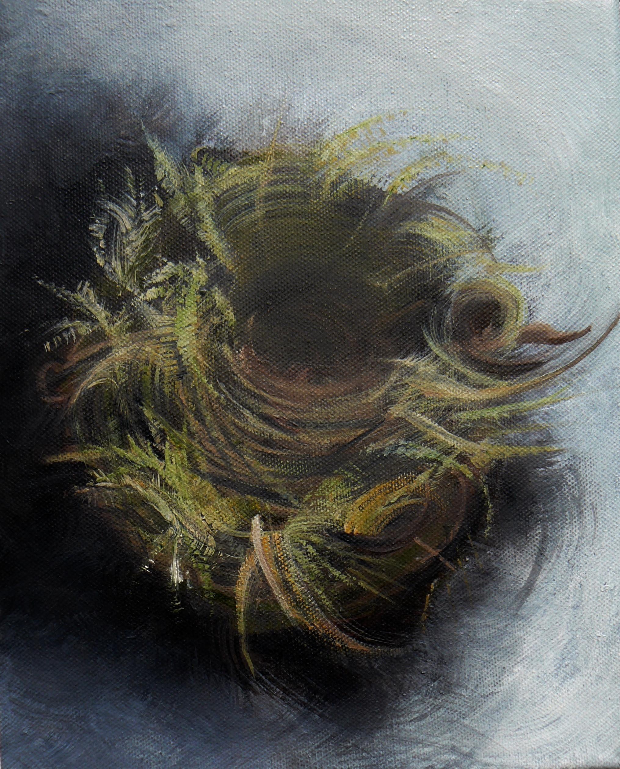 Robin's nest 2013