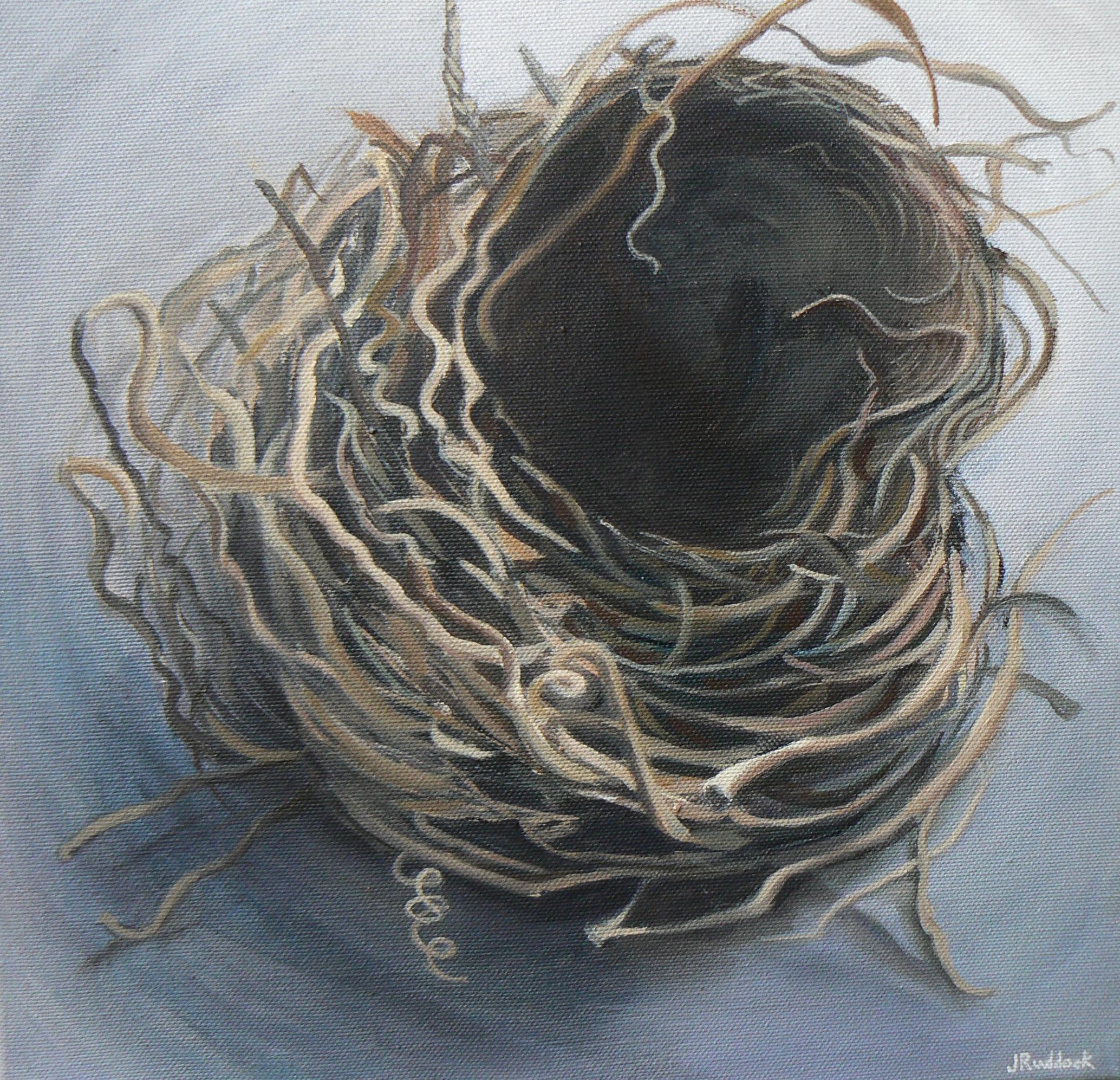 Blackbird's nest