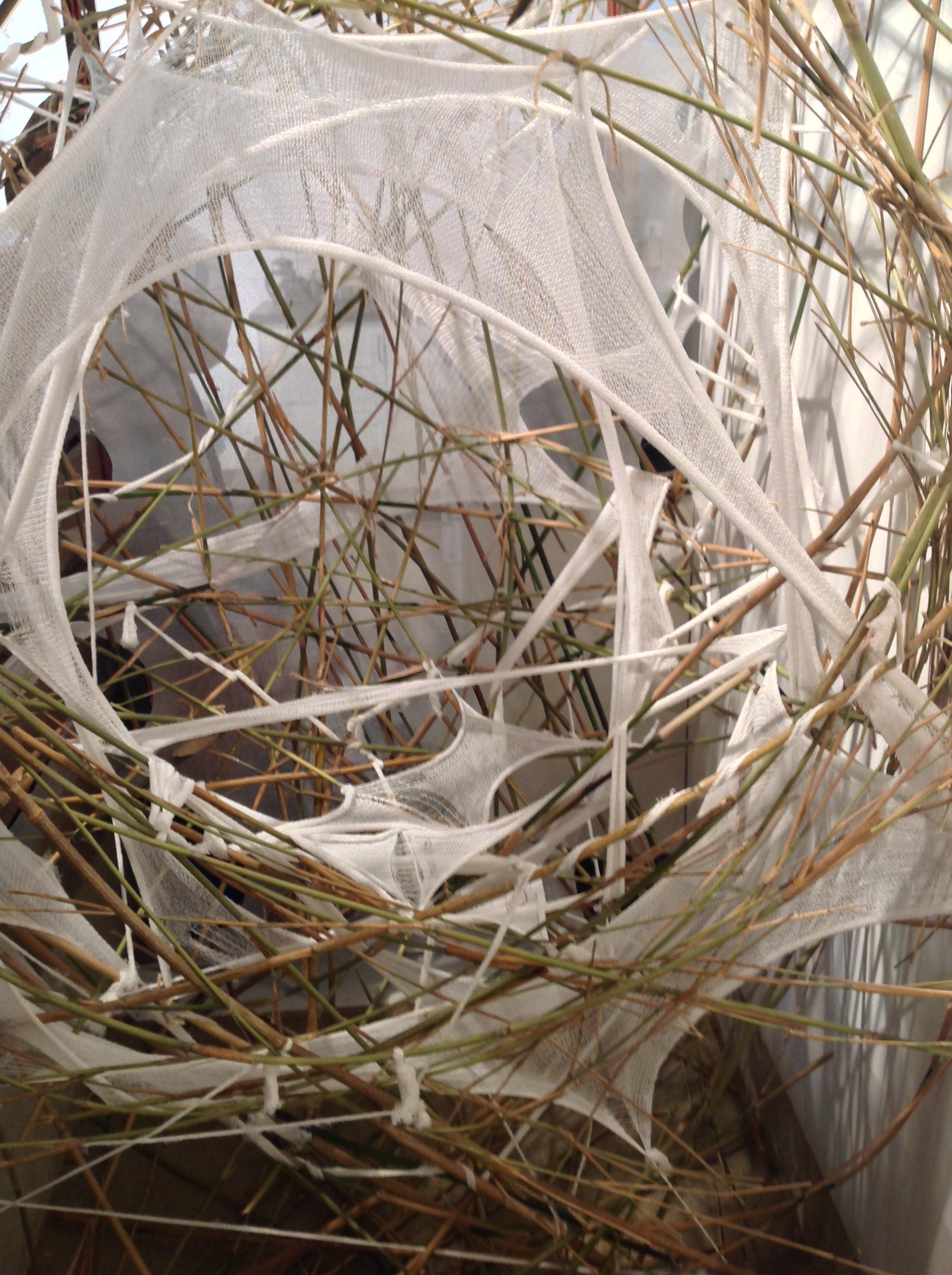 The Sunneyhill Nest 2014
