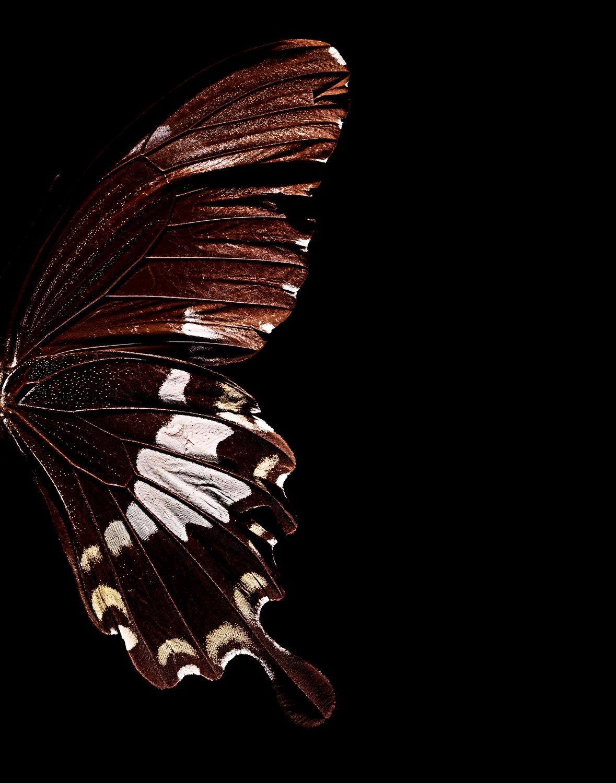 Brown-butterfly-wing.jpg
