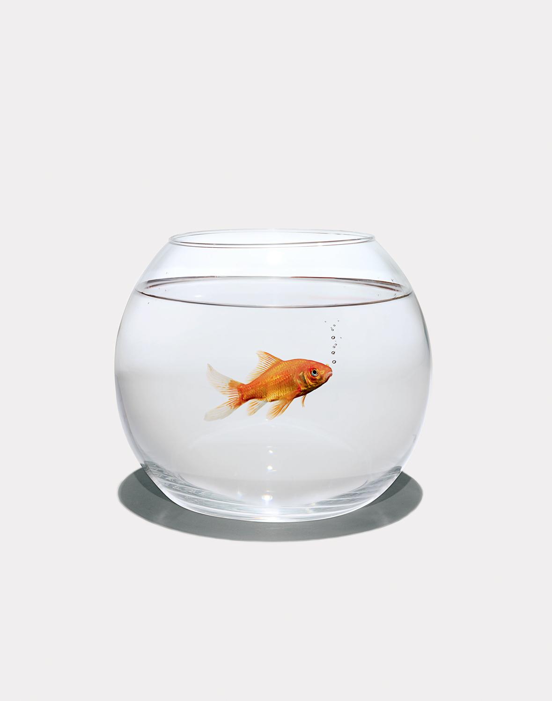 Fish-in-Bowl.jpg