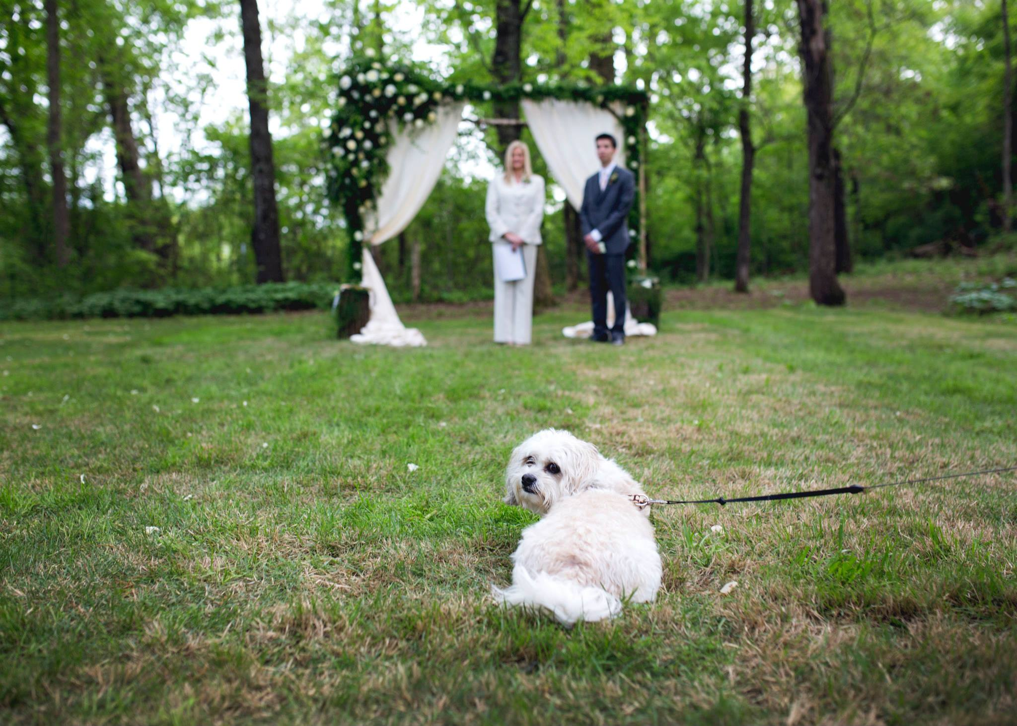 Pictures by Katie . Kelsey + Gueorgui 's dog Berba is adorable, y'all! He was a big hit at their wedding.