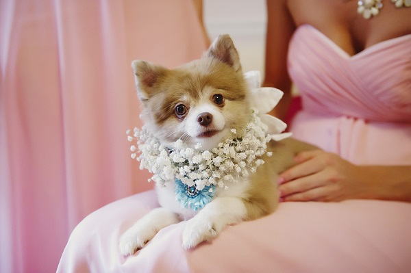 Melissa McCrotty Photography .  Emily + Casey 's pup, Banana, was all dolled up for this amazing wedding!