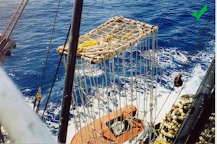When assembling the submerged section of the FAD, use materials such as loose rope, small-opening mesh or non-mesh fabric that will not entangle animals.