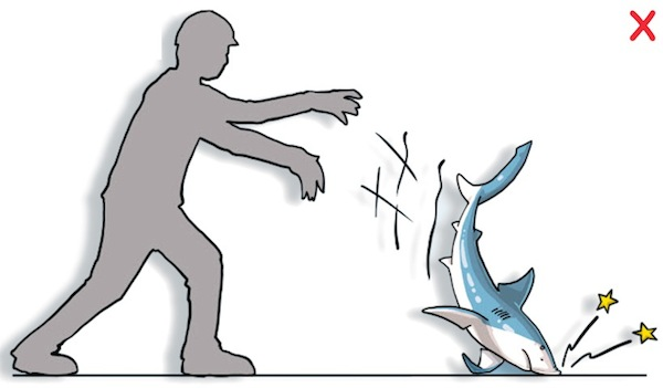 DO NOT throw, hit, or squeeze the animal. Prevent the animal from battering itself against the deck or other hard objects. (Poisson et al, 2012)