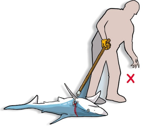 DO NOT insert a gaff, hook, or other pointed object to drag or lift the animal. (Poisson et al, 2012)