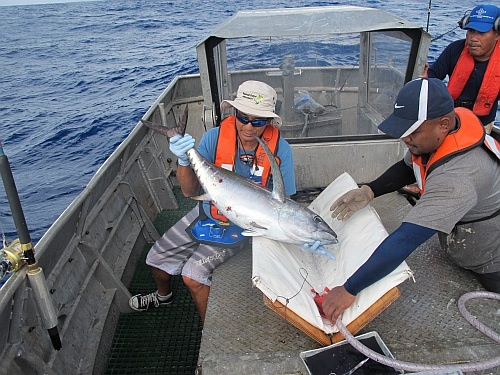 ISSF-sponsored scientist tagging a tuna during a bycatch research cruise in the Western Pacific Ocean.