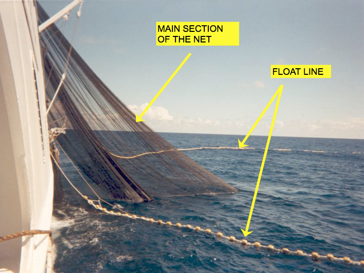The purse seine net (Photo: SPC)