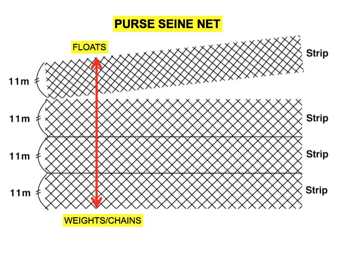 The purse seine net is made up of strips of net. By adding more strips, the net becomes deeper. Similarly, by removing strips, the net can be made shallower. Chains and/or weights are added to the bottom of the net to allow it to sink. Floats are used at the top of net. (Photo: SPC)