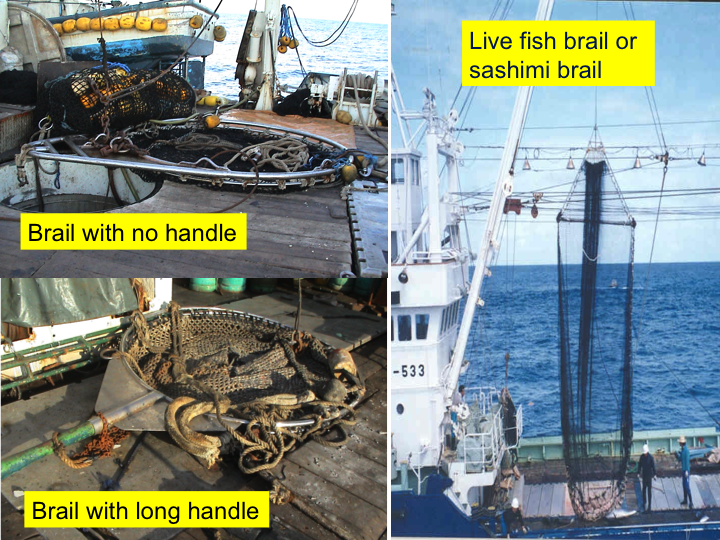 "Once the net has been set, the fish are harvested from the purse seine using a large scoop net called the ""brailer""; several tons of fish are taken on board each time. There are several types of brailers, and some are shown above. Where possible, it is important to note the brailer type and capacity. (Photo: SPC)"