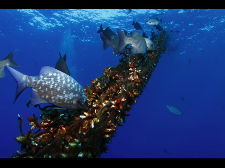 Sea life around a FAD (Photo: SPC)