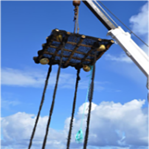 """Underwater netting held into bundles (""""sausages"""" or """"chorizos"""") with ropes (Photo: IRD)"""