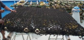 Tightly fitted small-mesh netting on raft
