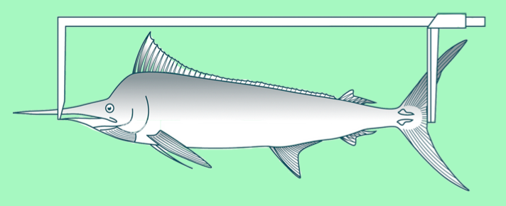 LF (lower jaw to fork in tail): for billfish (Photo: SPC)