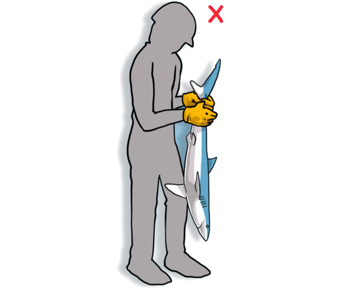 DO NOT lift the animal by its head or tail, as this can severely damage the spinal cord (Poisson et al, 2012)