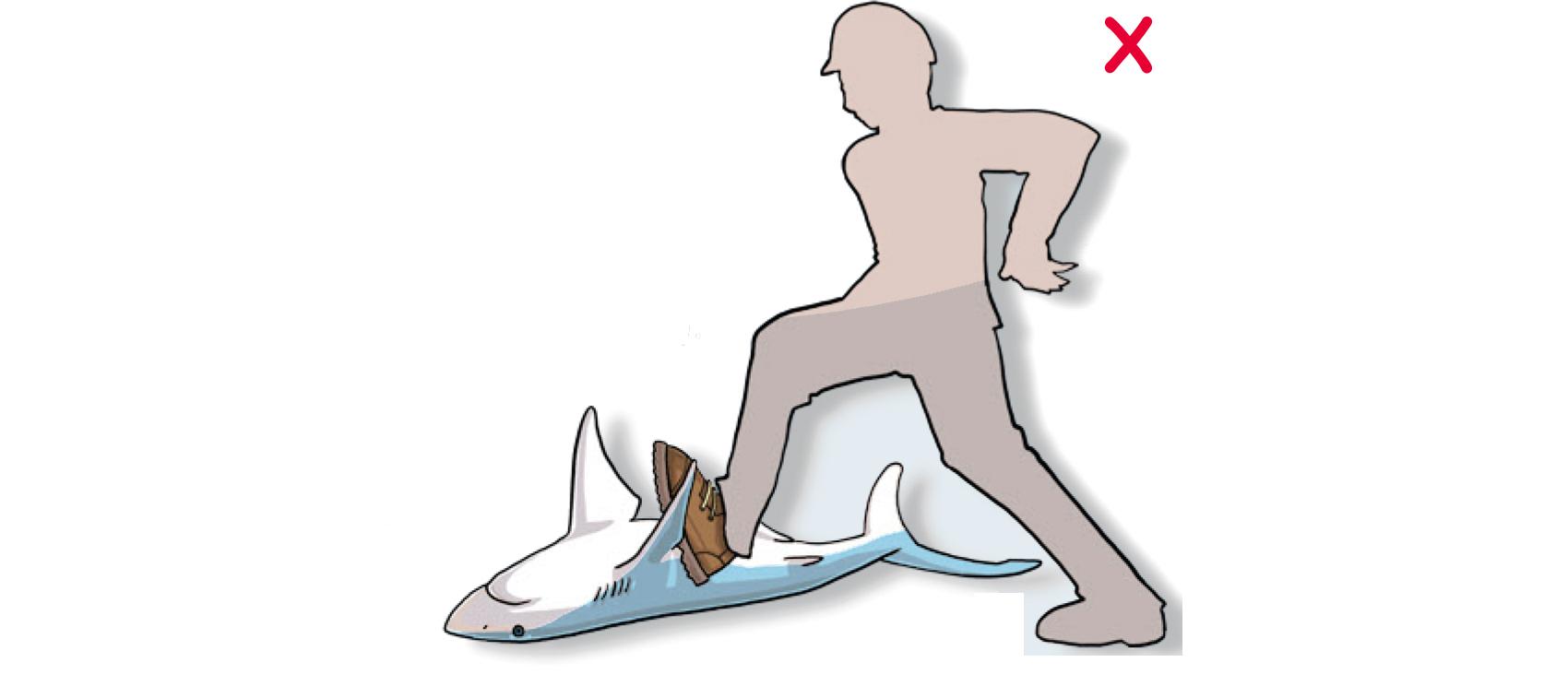 DO NOT yank or push the animal sharply. (Poisson et al, 2012)