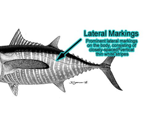 Lateral Markings (Photo: Schafer, 1999)