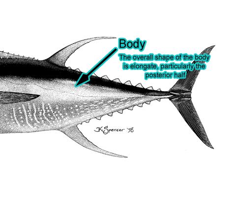 Body (Photo: Schafer, 1999)
