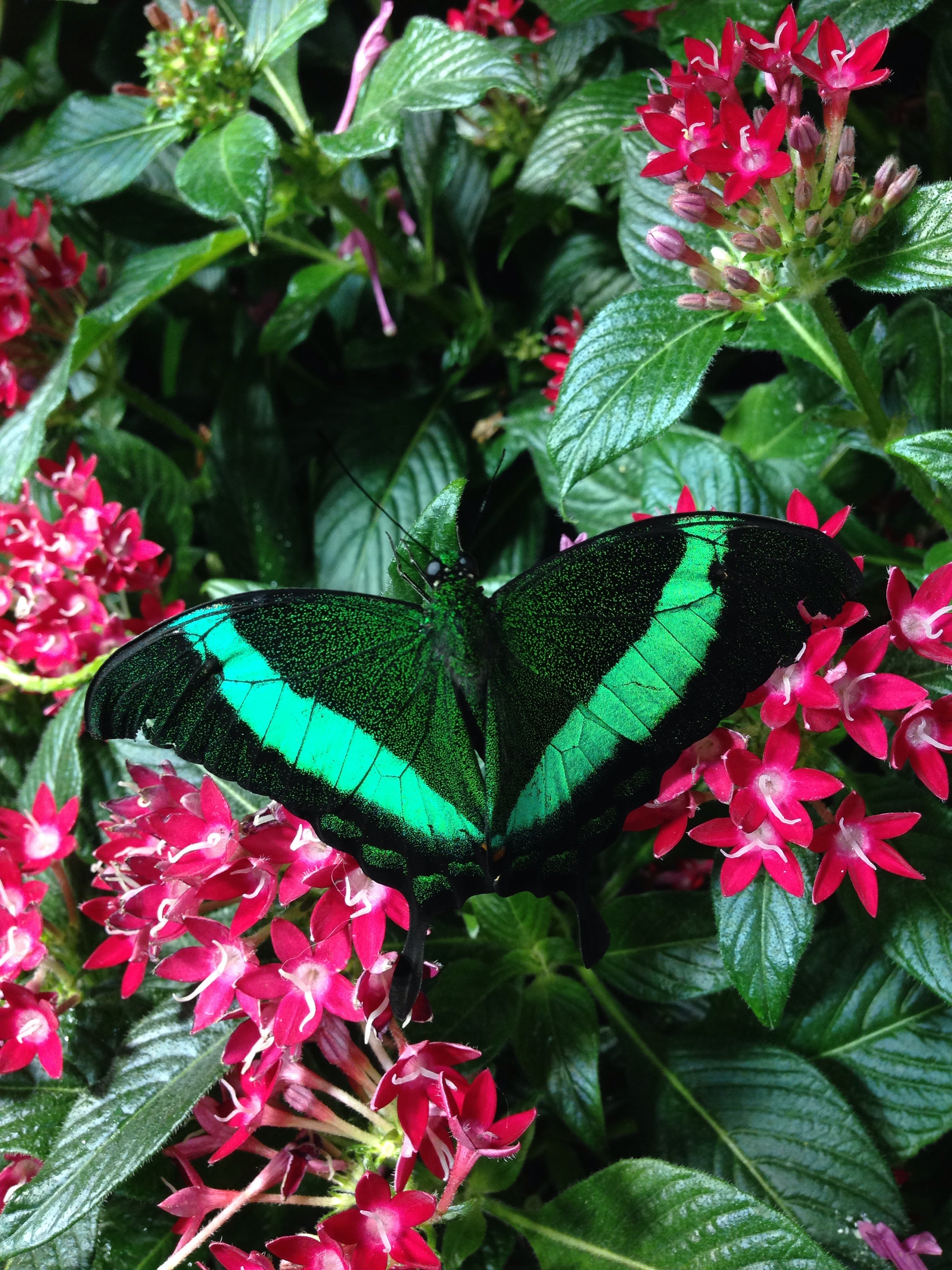 Smithsonian Live Butterfly Exhibit - Taken by Me - April 2014
