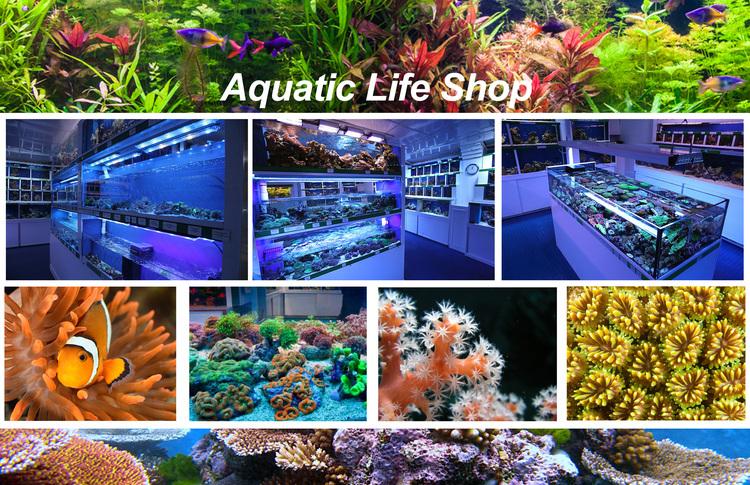 aquatic+life+shop+2.jpg