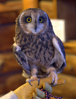 Flame, the Short-Eared Owl, got lots of visitors of all sizes.