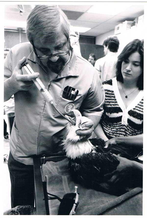 Dr. Scott treats an eagle injured during the Exxon Valdez oil spill.