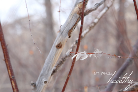 My husband's sudden illness made me feel like these delicate feathers, clinging to a branch.