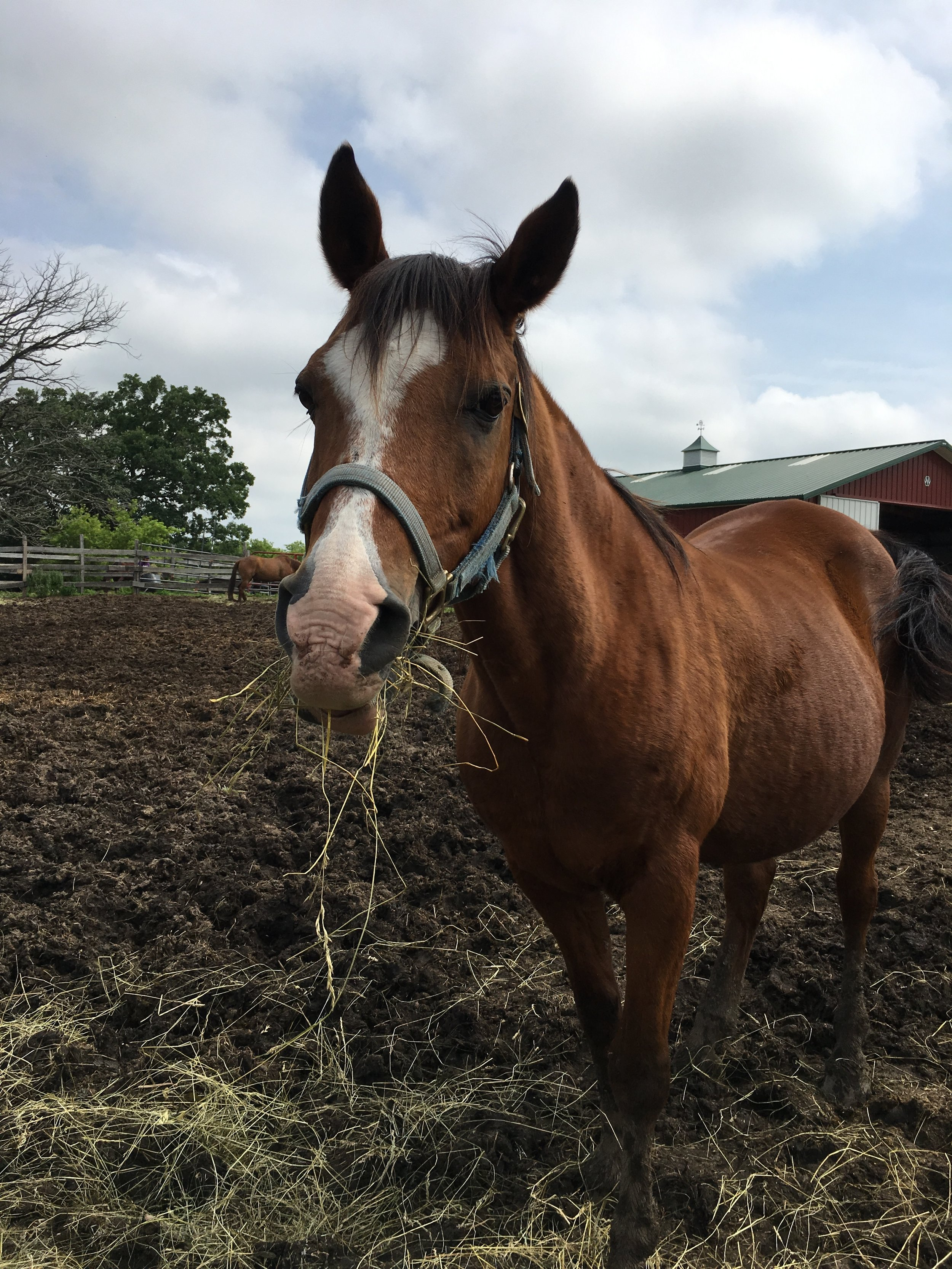 Reggie enjoys an afternoon snack while watching visitors at Stepping Stone Farms in Racine County.