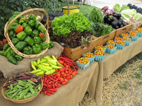 The Greenmarket at the Queens Farm Museum