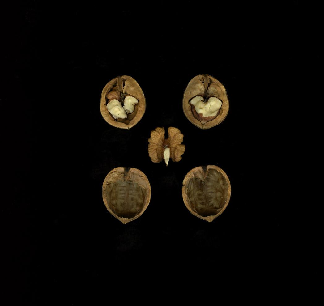 Carpathian Walnuts