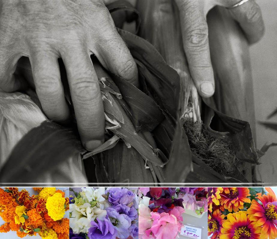 Anne Sommariva- Mountain Flower Farm