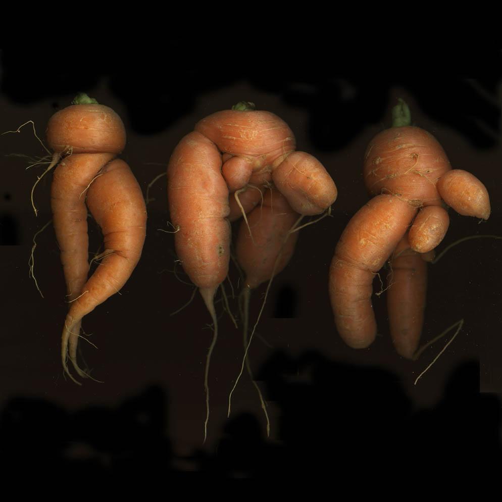 Carrots: One Straw Farm