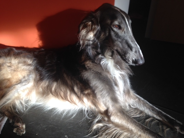 Atticus in the light II.jpg