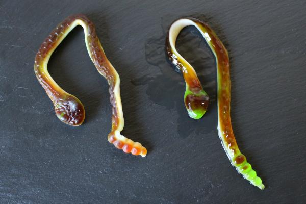 Gummy snakes!