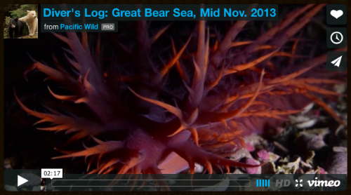 Pacific Wild - Winter Dive Expedition: Part II