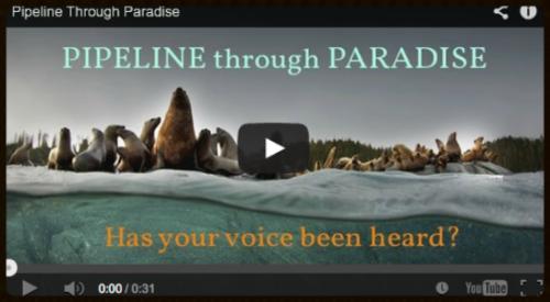 Pacific Wild -  PIPELINE through PARADISE