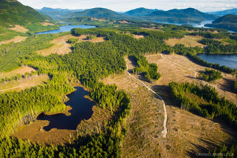 timberwestgreatbearrainforest