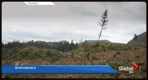Global News  - Is the Great Bear Rainforest at Risk?