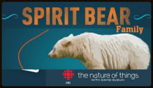 Spirit Bear Family,  a documentary by Jeff Turner for CBC The Nature of Things with David Suzuki