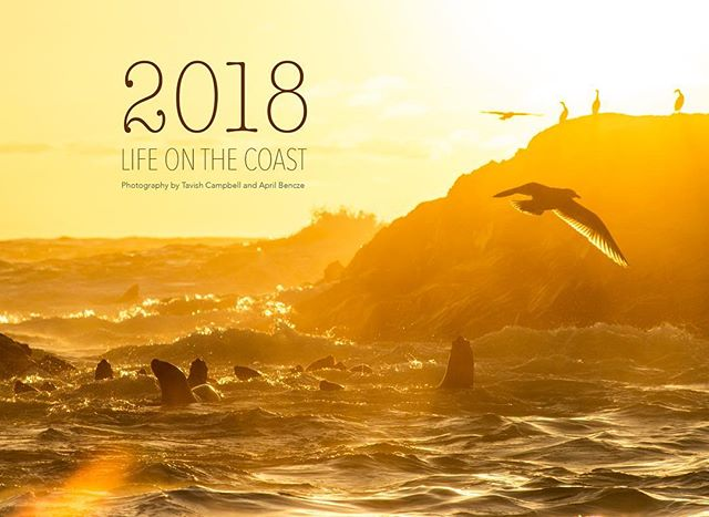 Life on the Coast Calendar 2018 •  An annual coastal collaboration between @aprilbencze and myself.  This year, all proceeds will be donated to the Twyla Roscovich Memorial Fund: an annual filmmaking scholarship for recepients to advance the protection of the environment through film. _____  About the cause:  Twyla Roscovich was an environmental filmmaker who was deeply connected to the British Columbia coast. She began filmmaking when she was seventeen years old, and used her storytelling abilities to focus on the tales of coastal wolves, grizzly bears, wild salmon, river valleys, coastal communities, and the threats they face. Her work advocated for wildlife, wild places, and indigenous rights. Twyla is the coast embodied. A wild, irreplaceable light, diverse and rich in her layers. Twyla's death came in September 2017. The seeds of love, strength, connection, and resilience continue to grow in the lives she encountered along her path.  The Twyla Roscovich Memorial Fund was born to give aspiring filmmakers the opportunity to attend a week-long intensive film workshop in BC; the same teachings Twyla received when she first began her life's work. The annual scholarship was established by friends and family through the Tides Canada Foundation to allow others to advance the protection of the environment through film.  These images come from the places Twyla loved and worked to protect. Both @aprilbencze and myself have been immeasurably inspired by Twyla as a friend and colleague. In donating the proceeds of the 2018 Life on the Coast calendar to this fund, Twyla's dedication will live on by enabling the next generation of storytellers to carry on the important work of protecting the planet. To order email: aprilbencze@gmail.com #lifeonthecoast2018