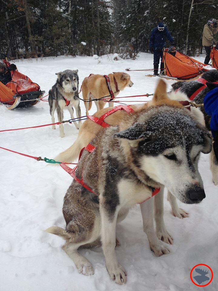 Blog_Okpik-CWLT_Sled-Dogs_January-2014.jpg