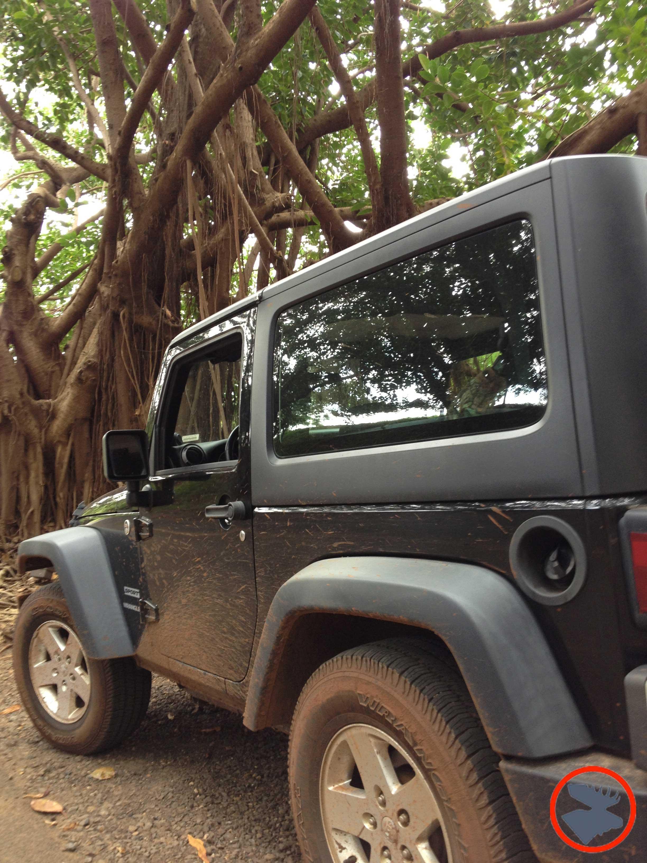 Jeep & Banyon Trees_Kauai.jpg