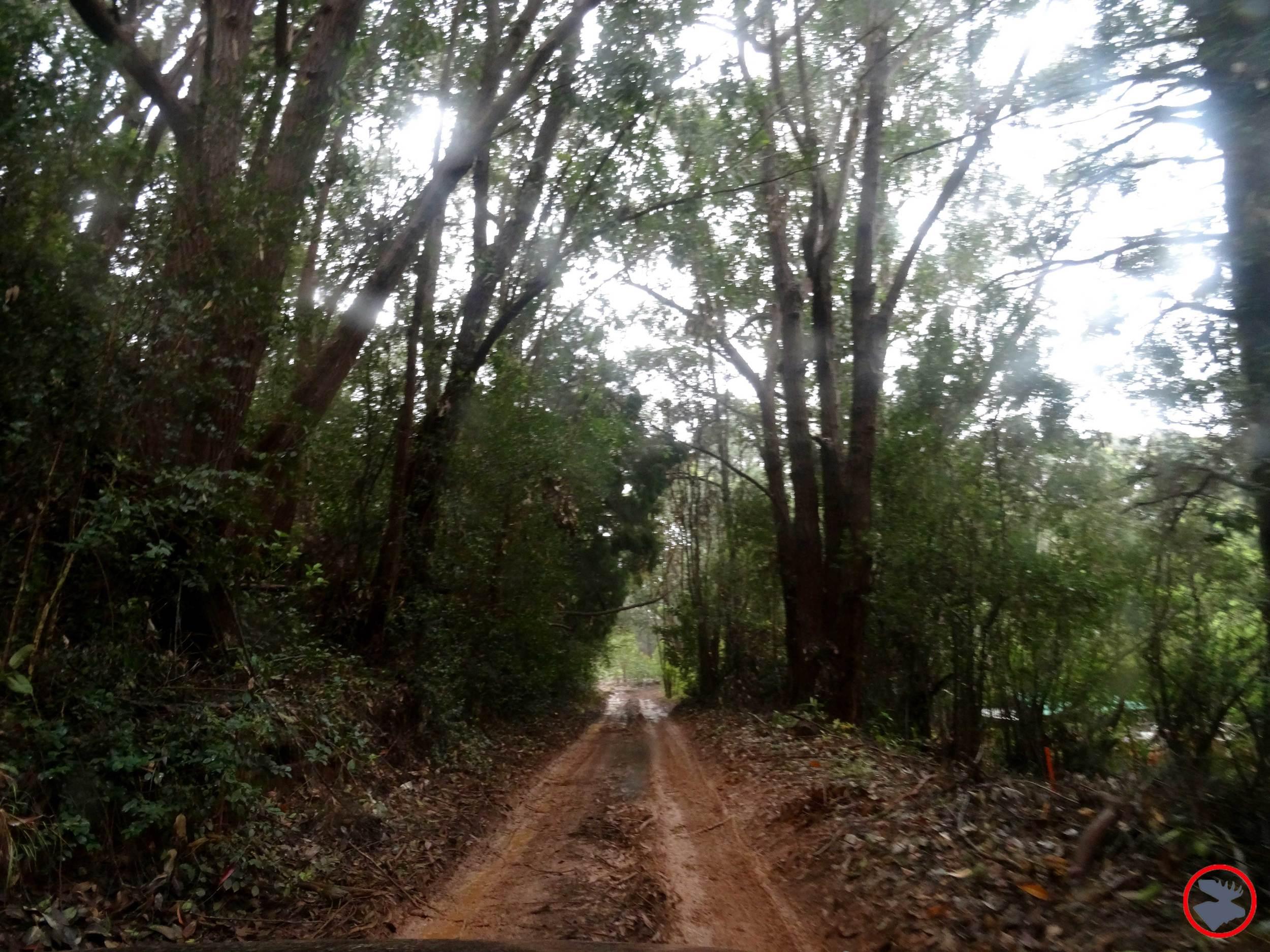 Road-to-BSA-Camp.jpg