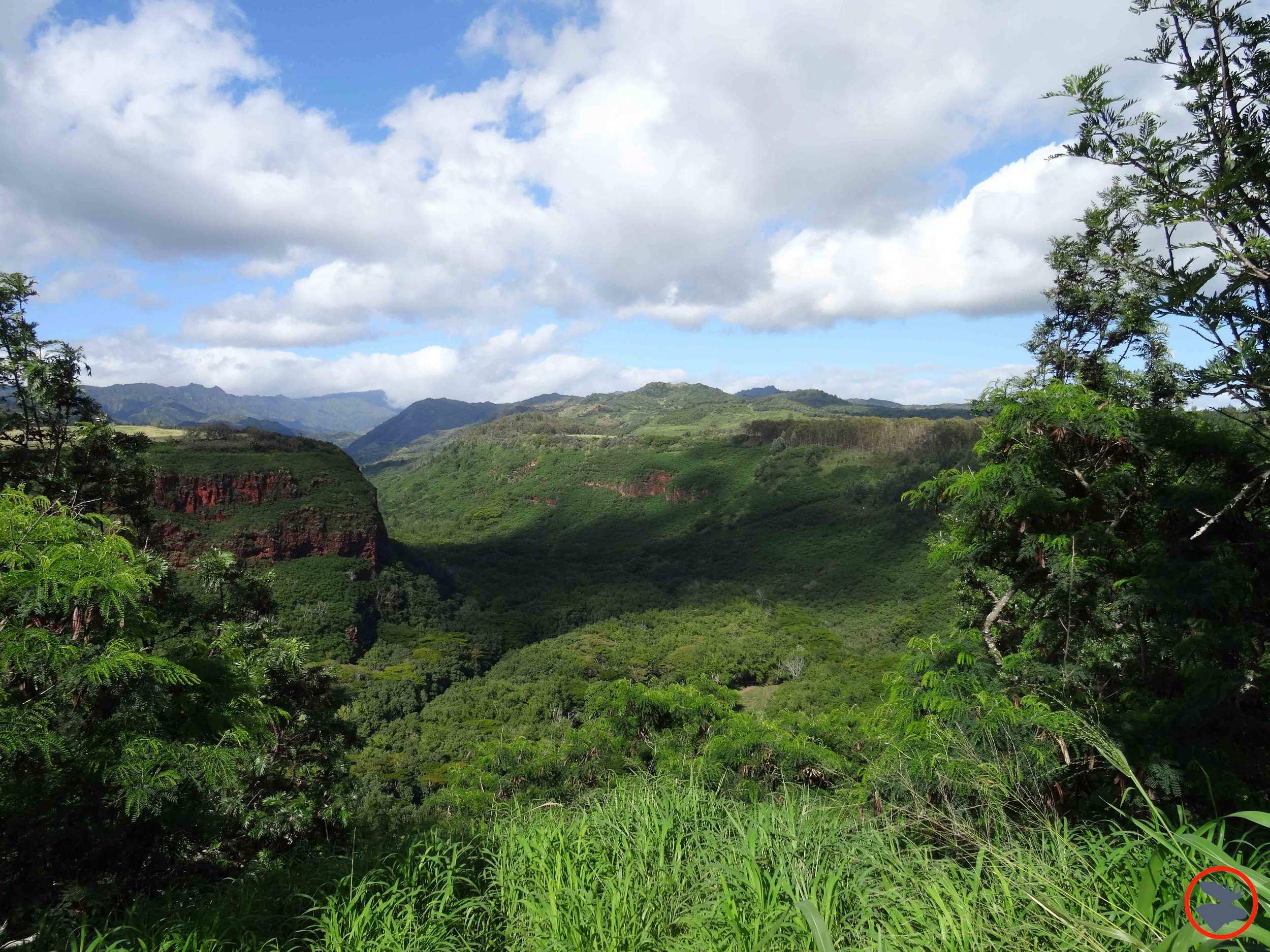Surrounding-Wailua-River2.jpg