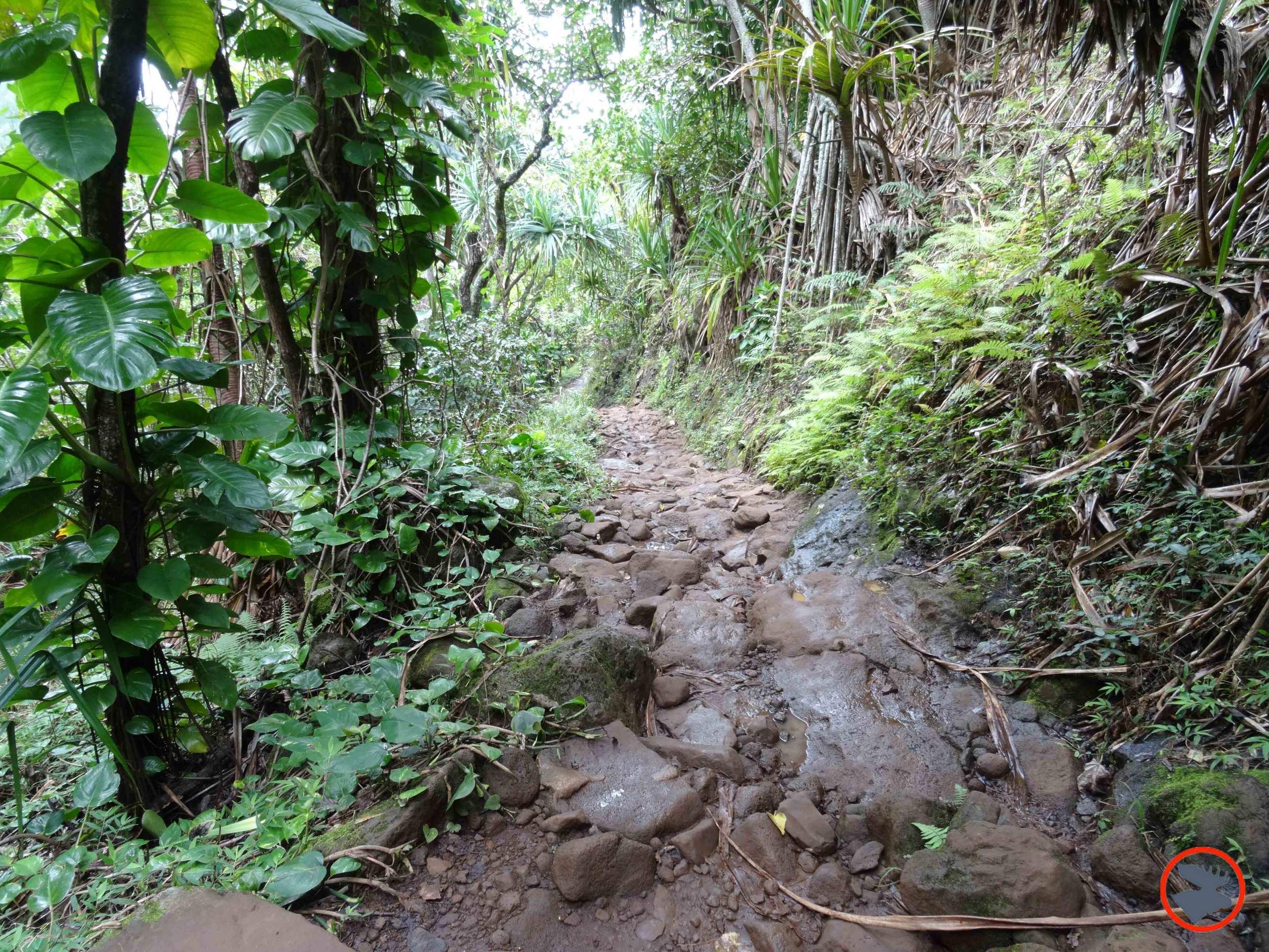 Kalalau-Trail-on-Napali-Coast3.jpg