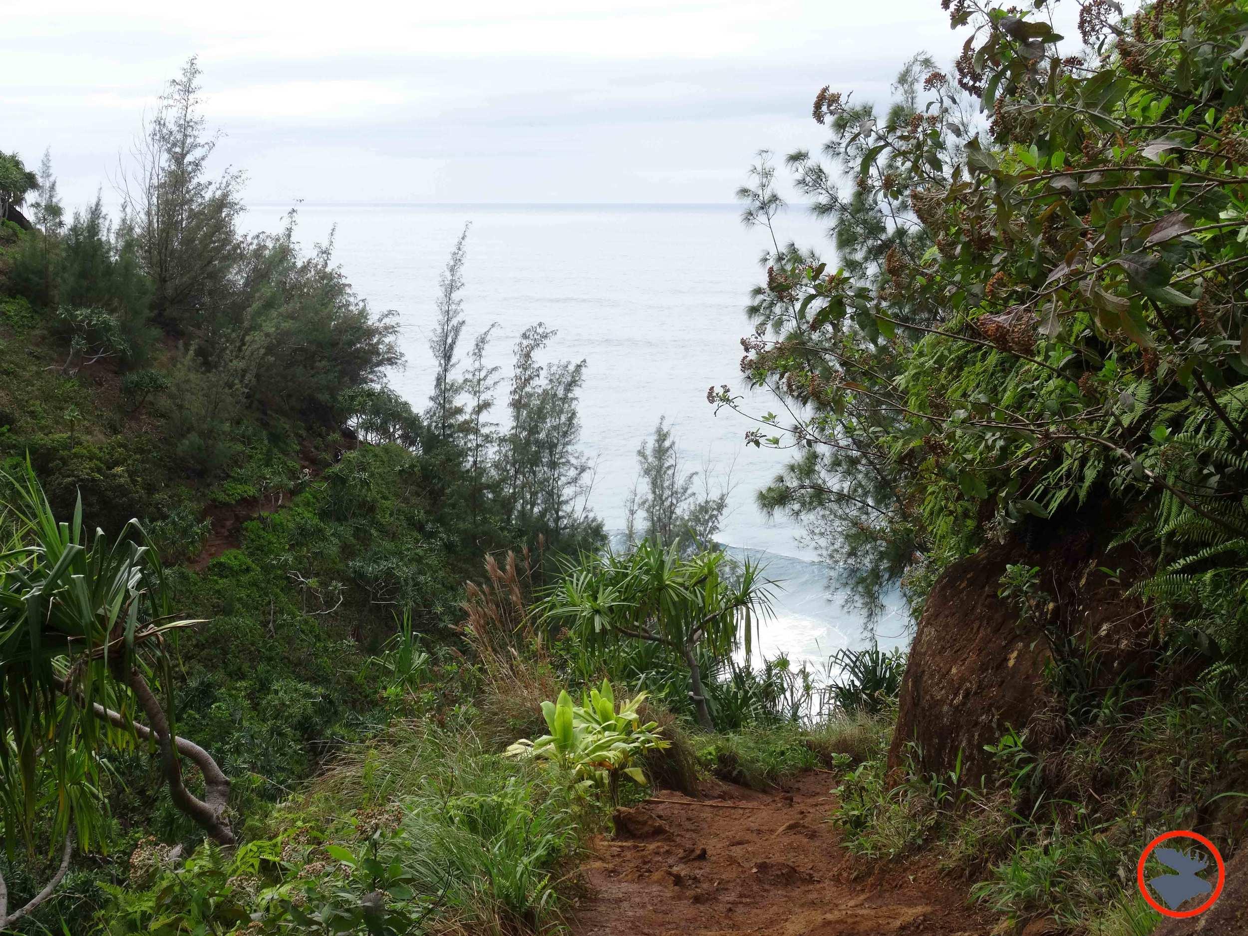 Kalalau-Trail-on-Napali-Coast4.jpg
