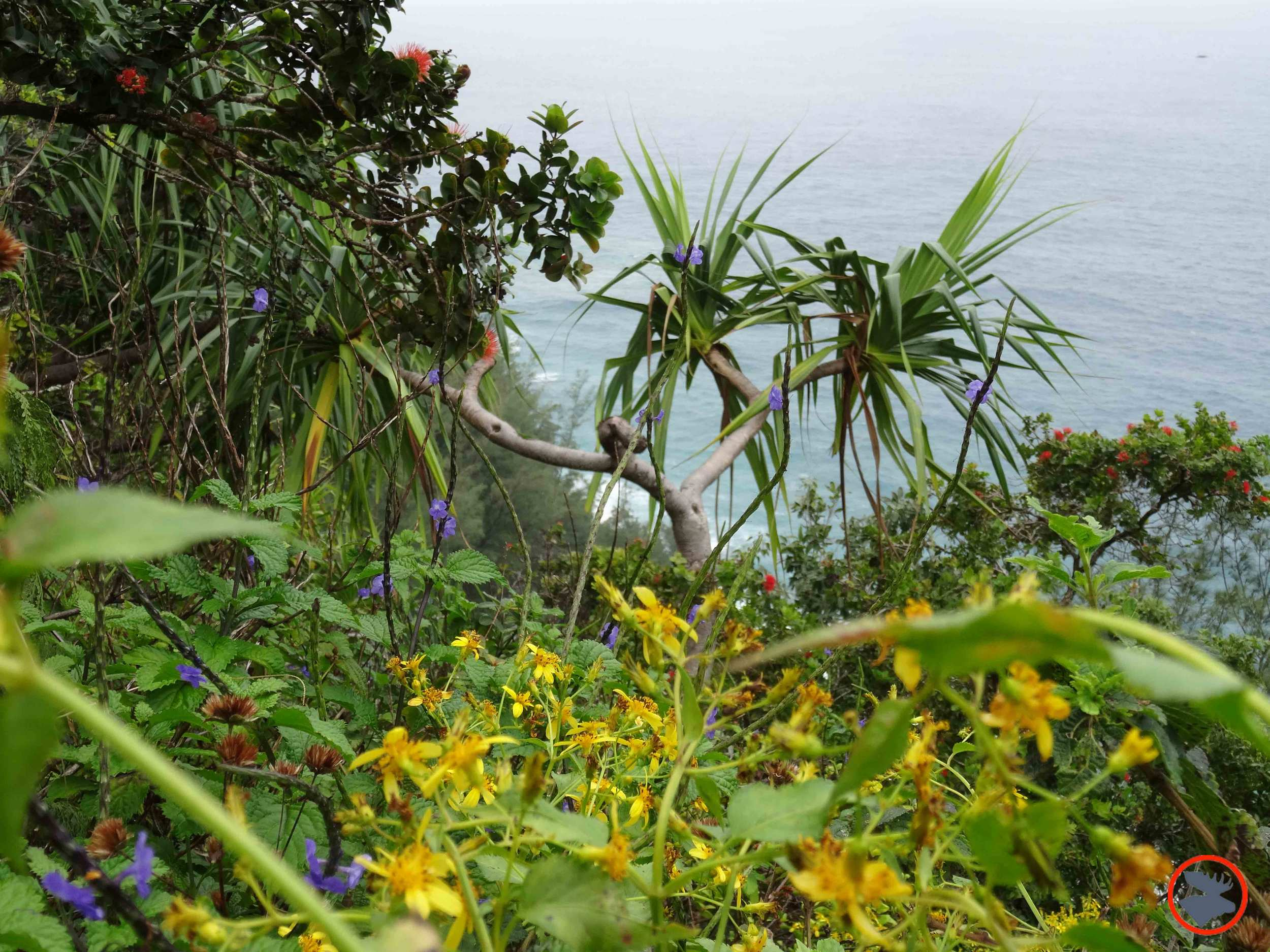 Napali-Flora2.jpg