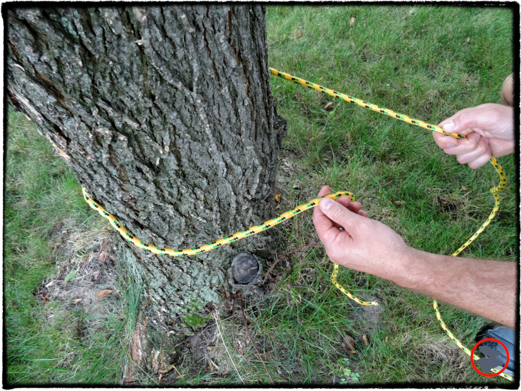 Step 1: Wrap your rope around a tree or other object with a surface that will provide friction.