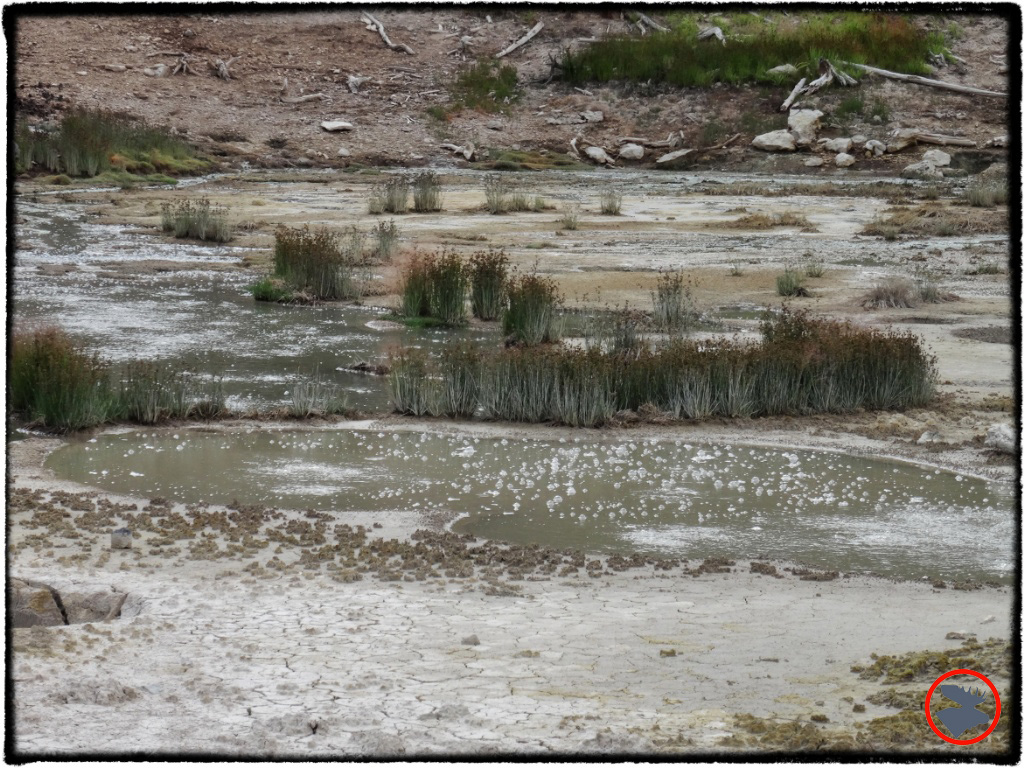 BMP-Post_Expedition-Log_Yellowstone_Bubbling-Hot-Springs_October-2-14.jpg