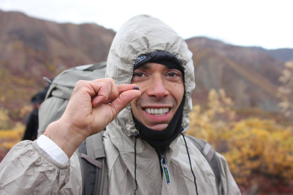 Mark showing off one of the millions of blueberries we came across in Denali.